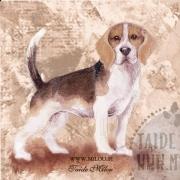 Beagle_M