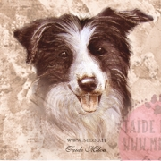 Bordercollie-mv_paa_M