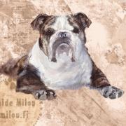 Bulldoggiru2_M