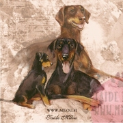 Dobermann_perhe_M