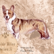 Welsh_corgi_cardigan