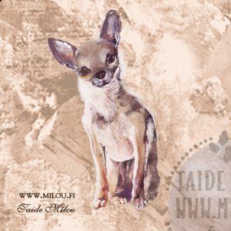 Chihuahua lyhytkarvainen
