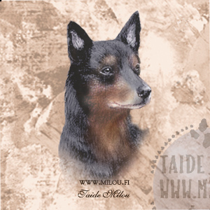 Australiankelpie_BT