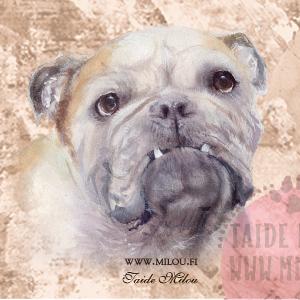 Bulldoggi2_M