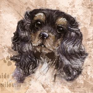 Cavalierkingcharlesinspanieli_blacktan_M