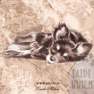 Chihuahua_pkBT_M