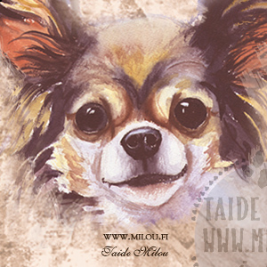Chihuahua_pk_M