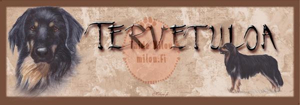 Hovawart_O