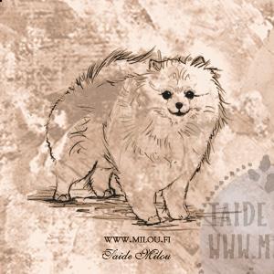 Pomeranian2_PM