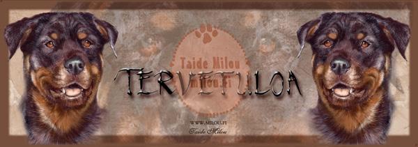 Rottweiler_O