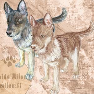 Saarlooswolfhund_M