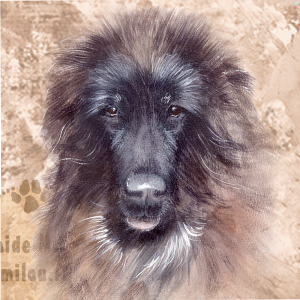 Tiibetinmastiffi_ pentu_M